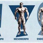 Tipos de morfologías para saber cómo entrenar.